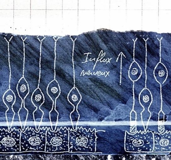 Ardoise bleue ©Sandrine Delrieu 2011