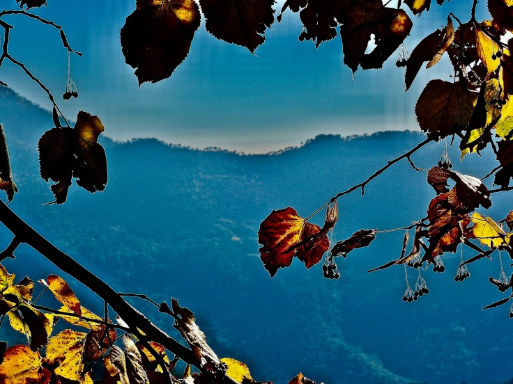 Ciel bleu feuilles - Sandrine Delrieu